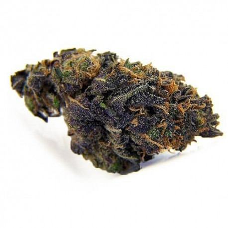 CBD Blackberry Kush 11,1%